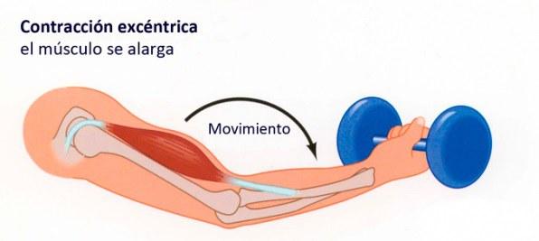 contracción muscular excéntrica