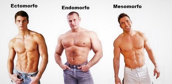 ectomorfo-endomorfo-y-mesomorfo