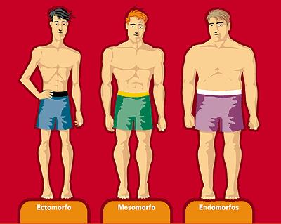 tipos de morfologia, endmorfo, ectomorfo y mesomorfo