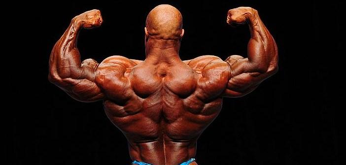 anatomia de los músculos de la espalda