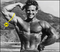 medidas del cuerpo bíceps
