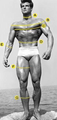 118b90e05 Cómo tomar las medidas del cuerpo