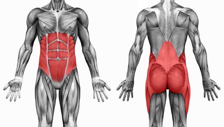 Músculos del núcleo corporal