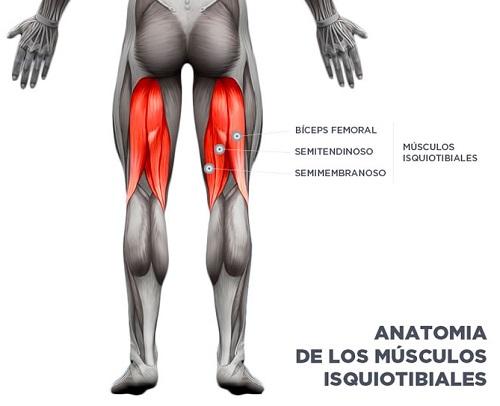 los-músculos-isquiotibiales