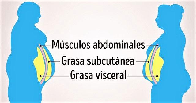 grasa-abdominal